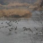 DSC_0032 ptačenky